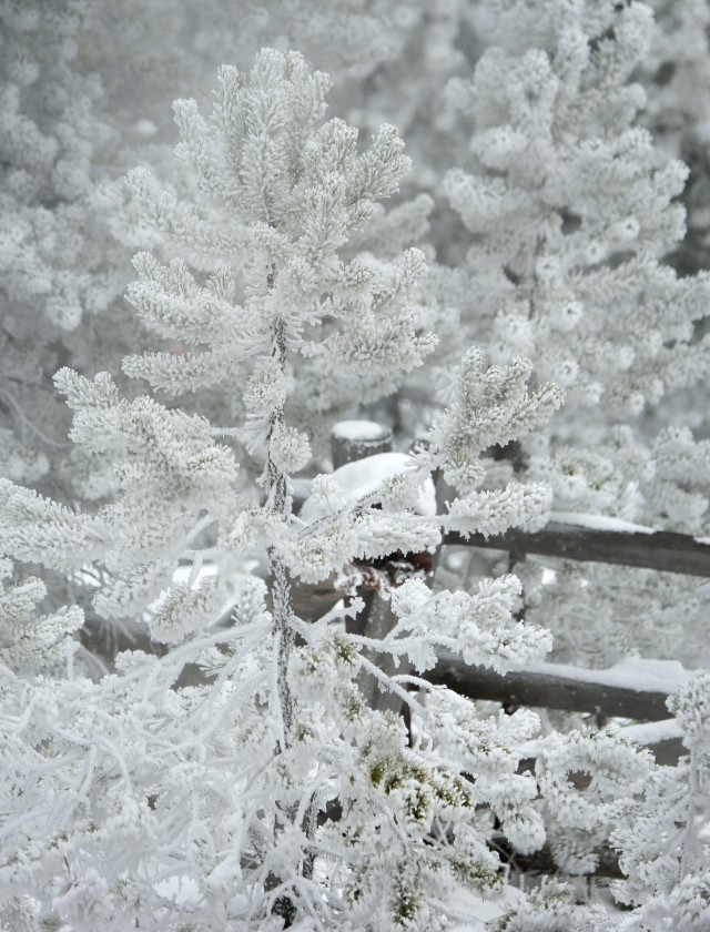 Frosty_1