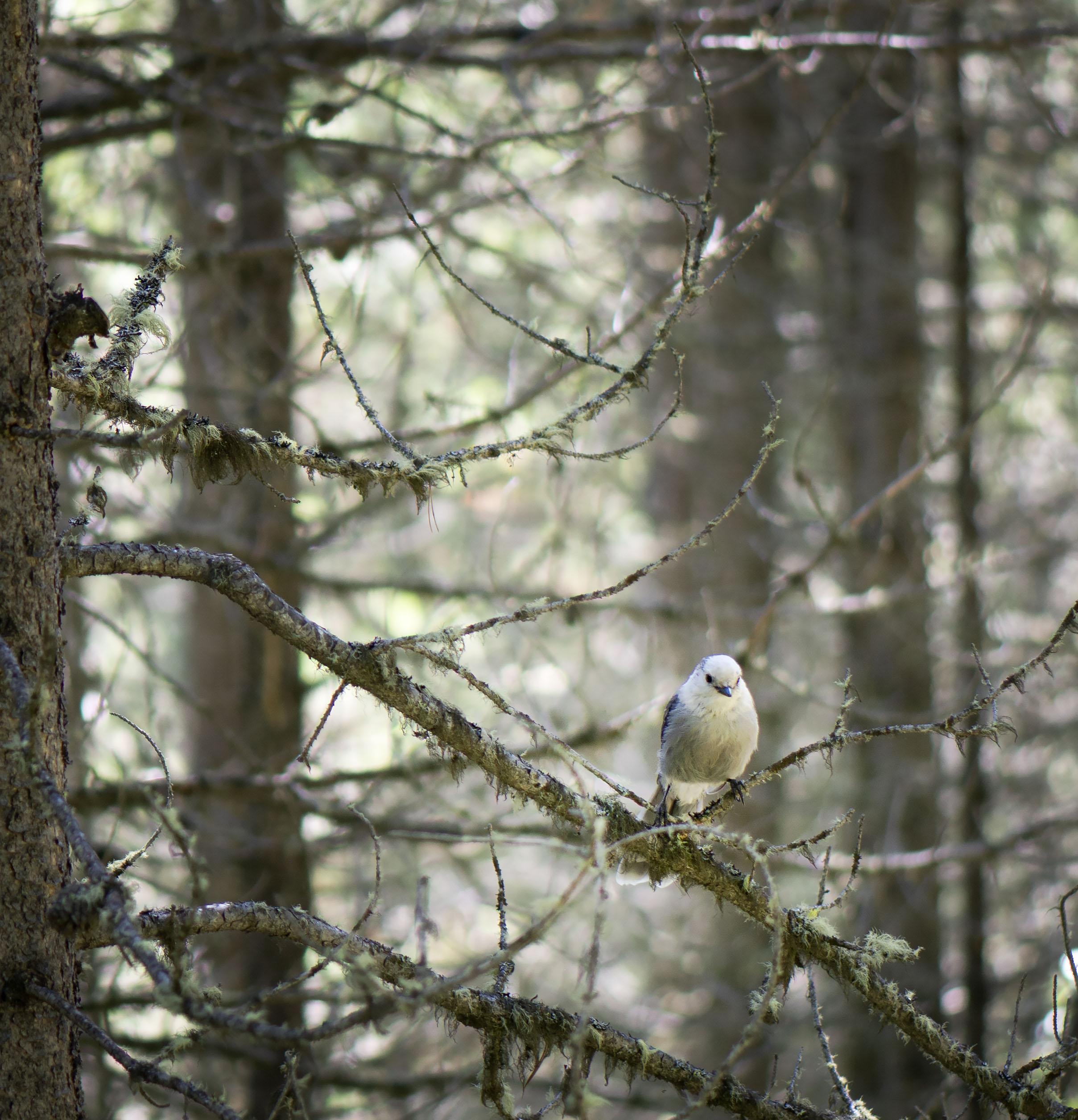In_a_lichen_filled_forest_1