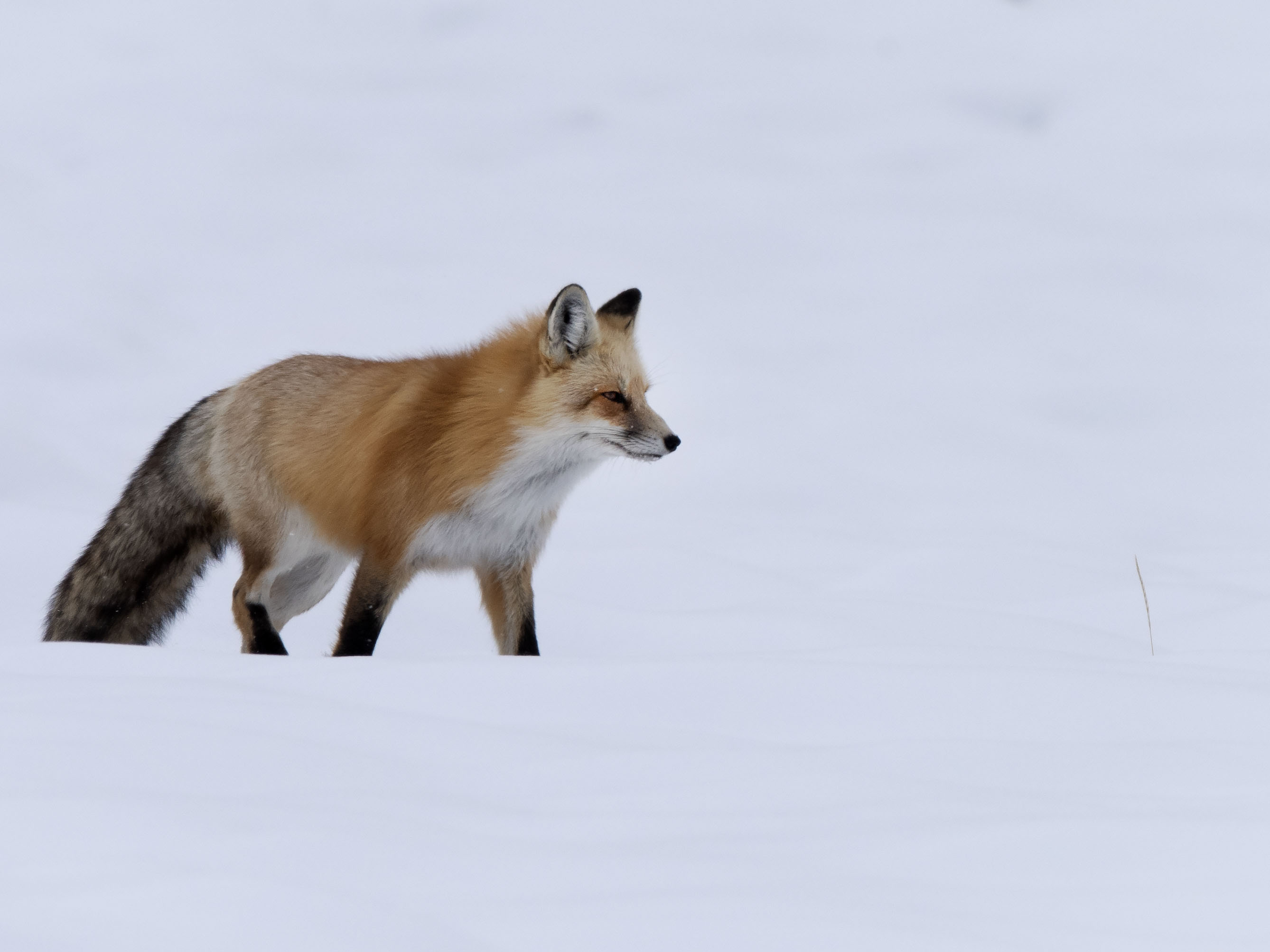 On_the_prowl_09231
