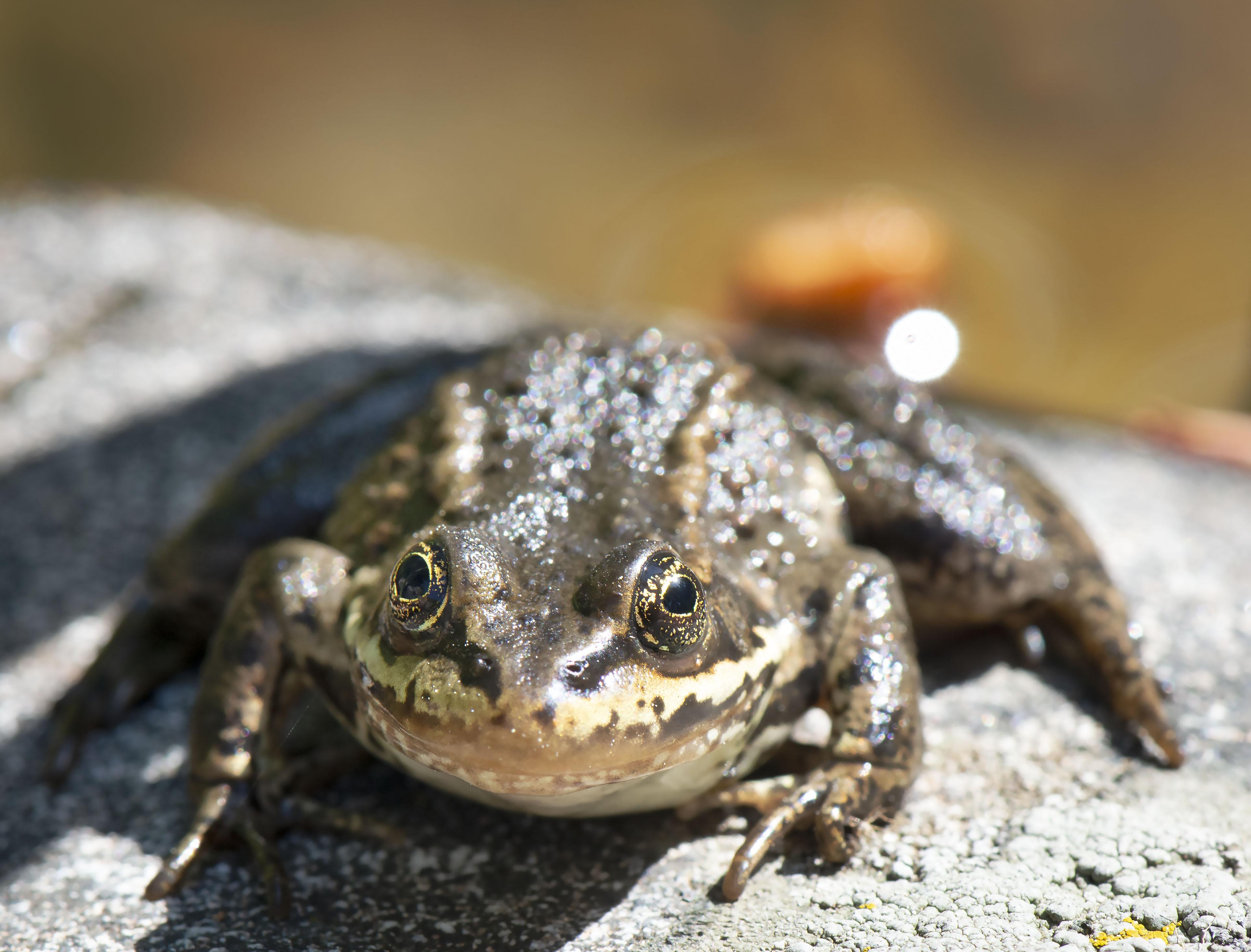 Frog_eyes_1435