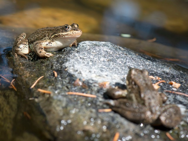 Two_frogs_8923