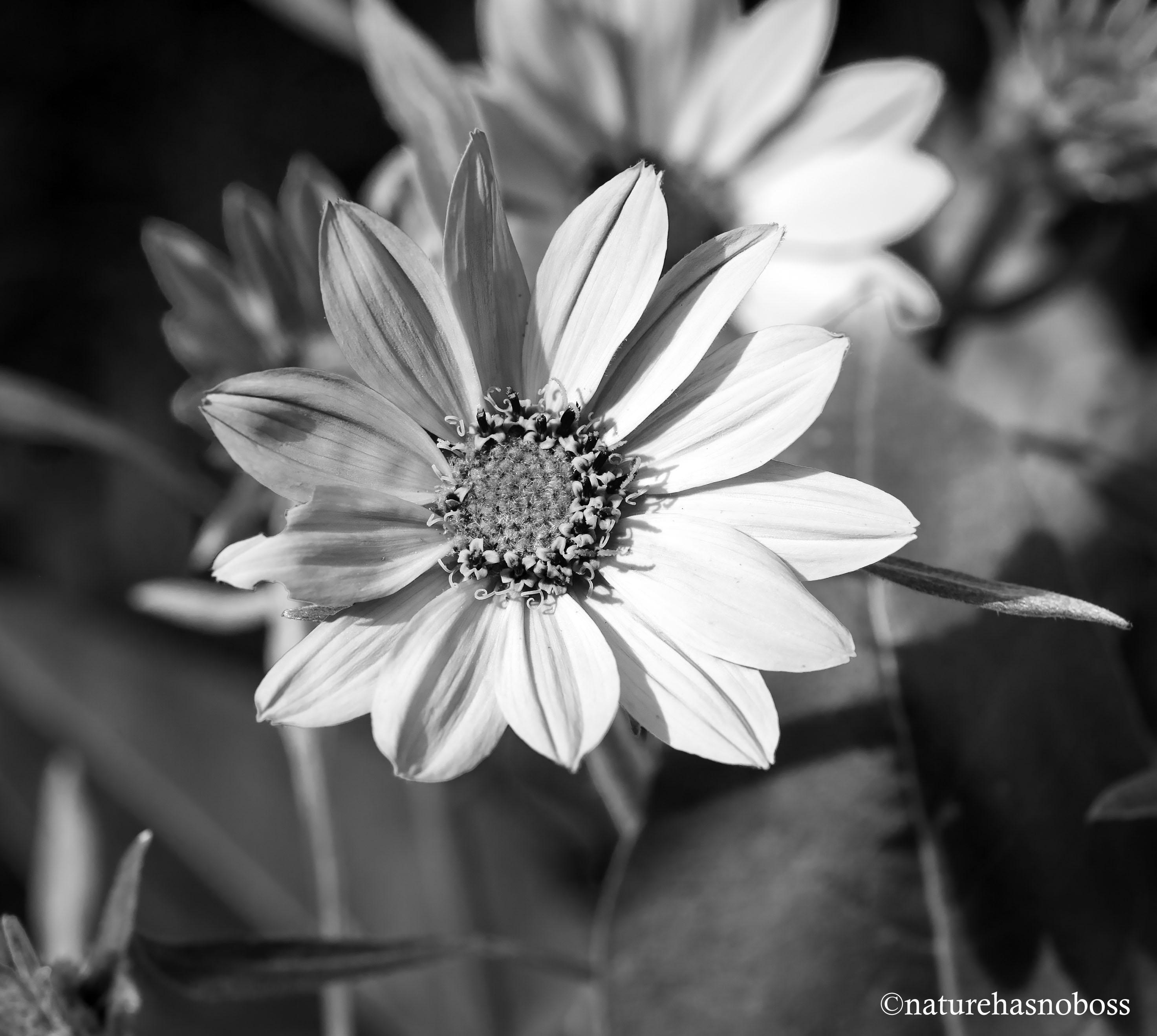 WIldflower_monochromes_675612 copy