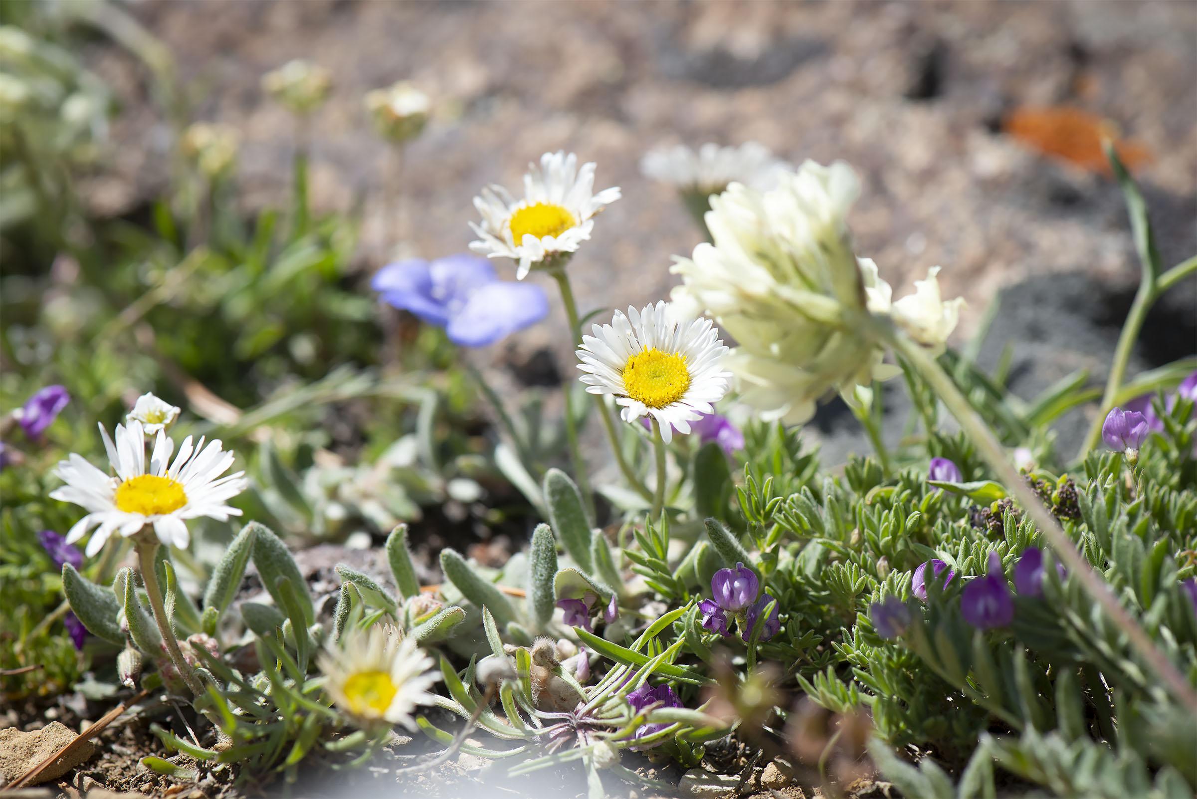 Alpine_gardens_0001