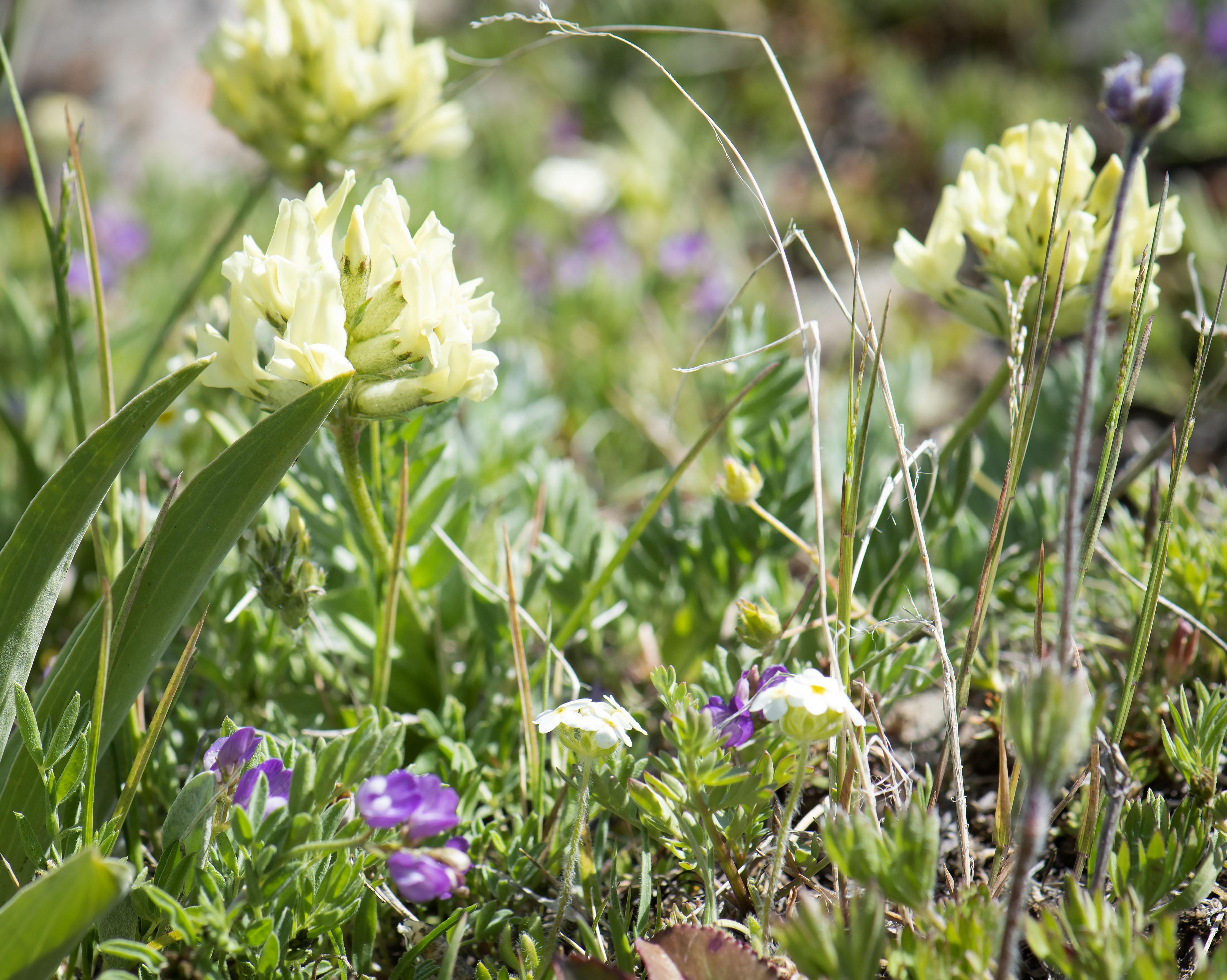 Alpine_gardens_0002