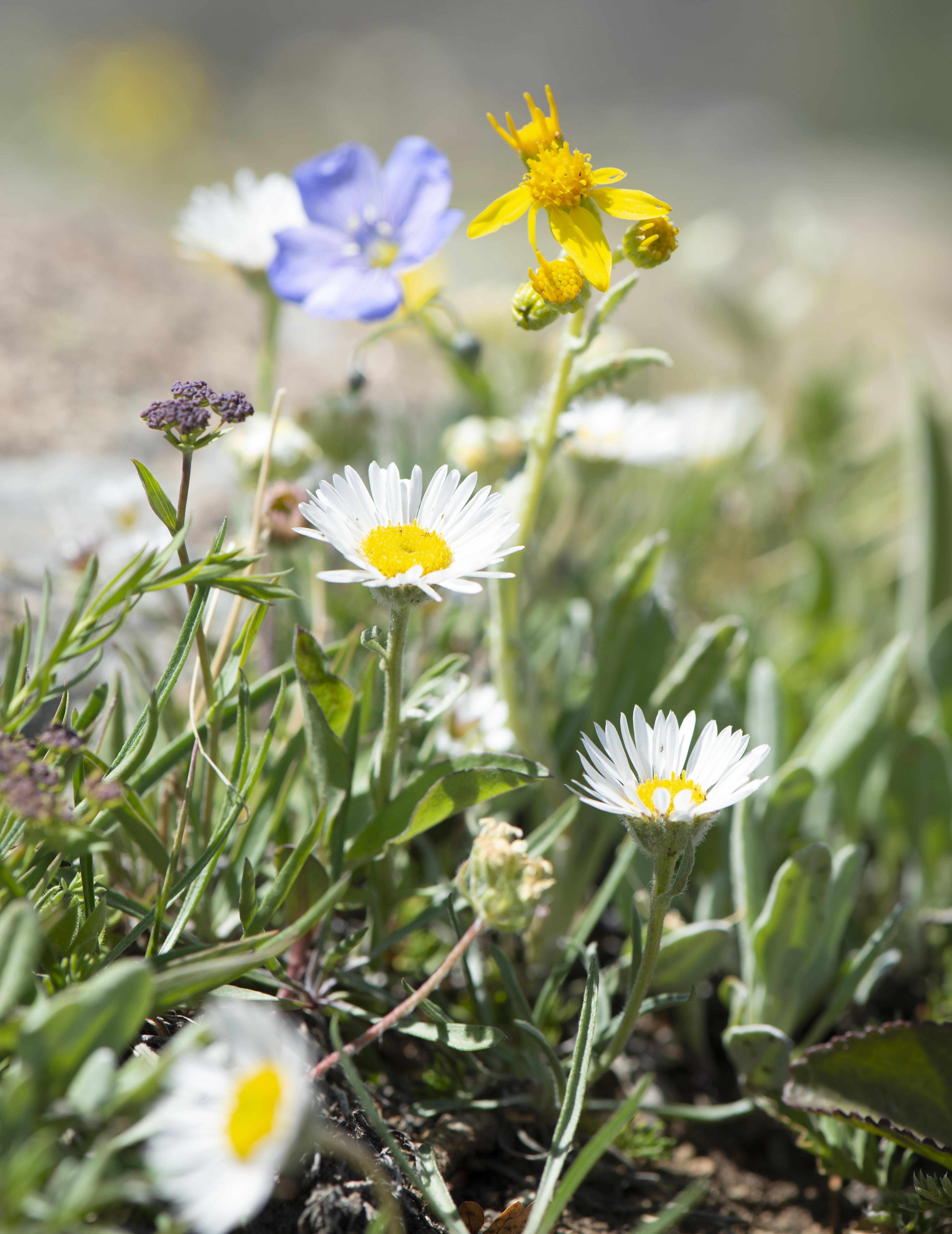 Alpine_gardens_0003