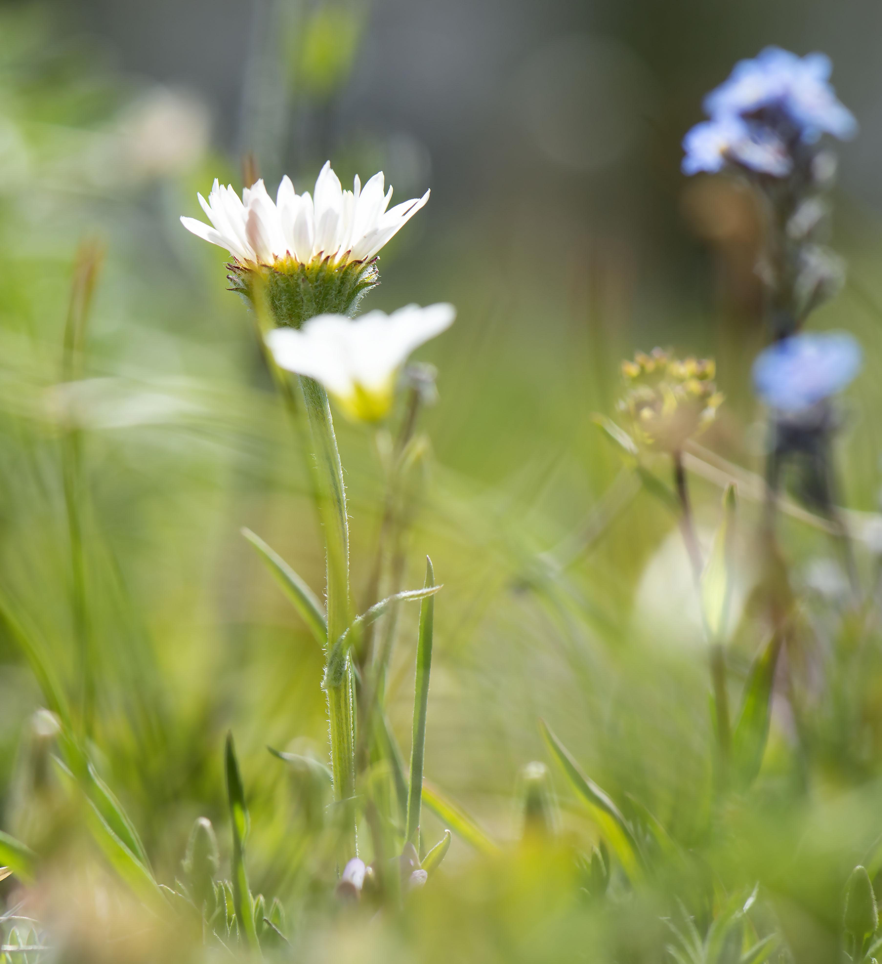 Alpine_gardens_0004