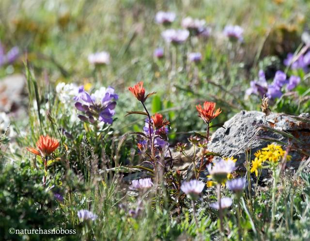 Alpine_garden_10 copy